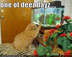 one of deez dayz....