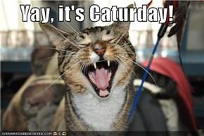 Yay, it's Caturday!
