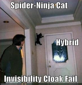 Spider-Ninja Cat Hybrid Invisibility Cloak Fail