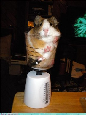 Cavy in a Cup