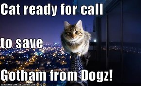 Cat ready for call to save Gotham from Dogz!