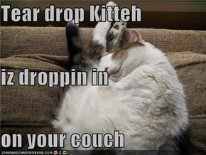 Tear drop Kitteh iz droppin in on your couch