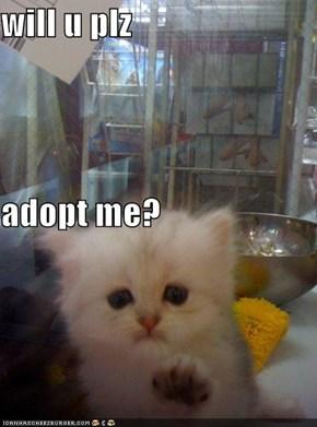 will u plz adopt me?