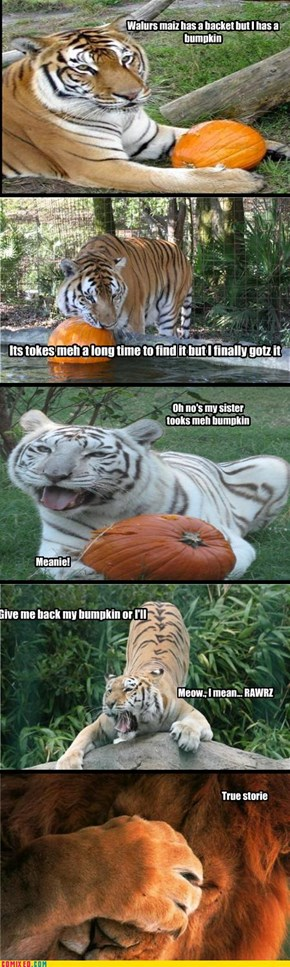 Tiger has a bumpkin