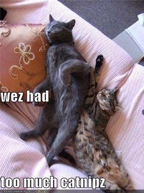 wez had too much catnipz