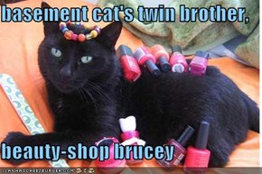 basement cat's twin brother,  beauty-shop brucey