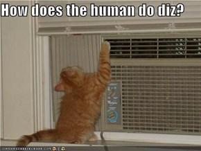 How does the human do diz?