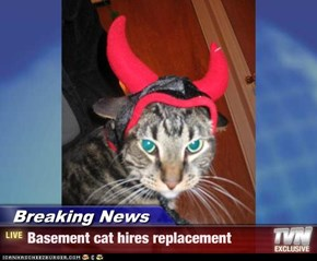 Breaking News - Basement cat hires replacement