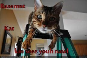 Basemnt    Kat kin seez youh nawl