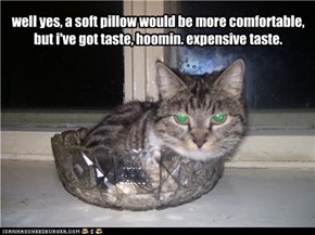 well yes, a soft pillow would be more comfortable, but i've got taste, hoomin. expensive taste.