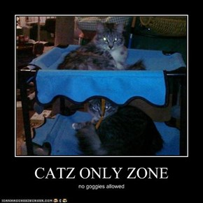 CATZ ONLY ZONE