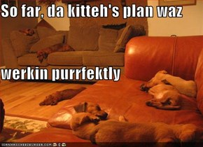 So far, da kitteh's plan waz werkin purrfektly