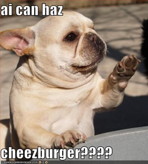 ai can haz  cheezburger????
