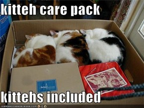 kitteh care pack  kittehs included