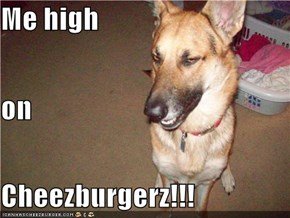 Me high on Cheezburgerz!!!