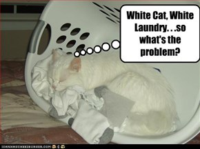 White Cat, White Laundry. . .so what's the problem?