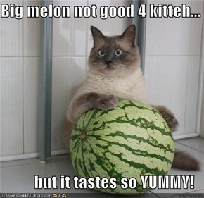 Big melon not good 4 kitteh...  but it tastes so YUMMY!