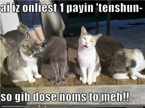 ai iz onliest 1 payin 'tenshun-  so gib dose noms to meh!!