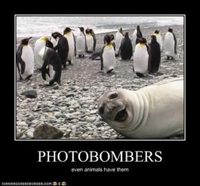 PHOTOBOMBERS