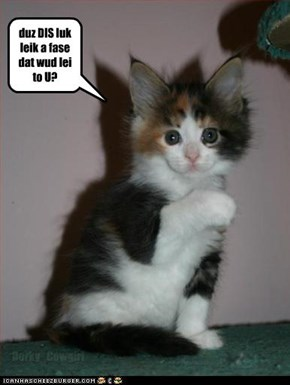busted kitteh say: