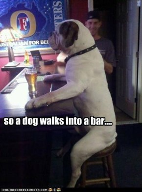 so... a dog walks into a bar
