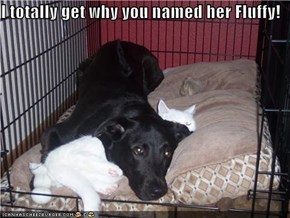 I totally get why you named her Fluffy!
