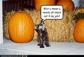 But ai wantz 2 B da Halloween cat