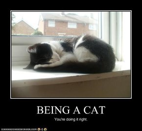 BEING A CAT