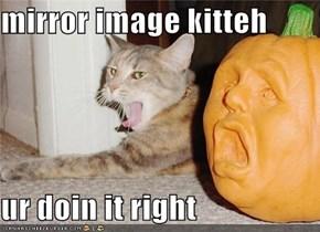 mirror image kitteh  ur doin it right