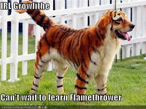 IRL Growlithe  Can't wait to learn Flamethrower