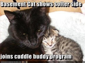 Basement Cat shows softer side  joins cuddle buddy program