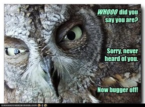 Well, Owl be dammed!