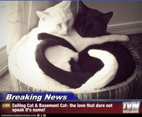 Breaking News - Ceiling Cat & Basement Cat- the love that dare not speak it's name!