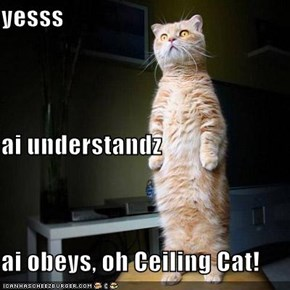 yesss ai understandz ai obeys, oh Ceiling Cat!