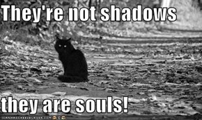 They're not shadows  they are souls!