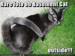 Rare foto ob Basement Cat  outside!!!