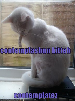 contemplashun kitteh contemplatez