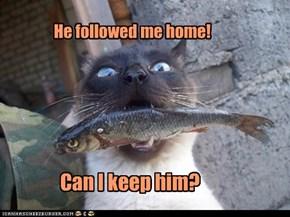 He followed me home!