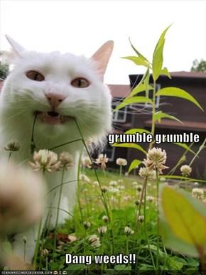 grumble grumble Dang weeds!!