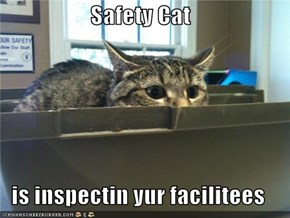 Safety Cat  is inspectin yur facilitees
