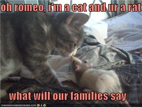 oh romeo, i'm a cat and ur a rat      what will our families say