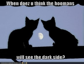 When doez u think the hoomans  will see the dark side?