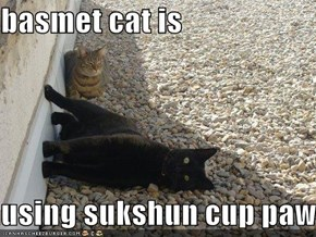 basmet cat is  using sukshun cup paws