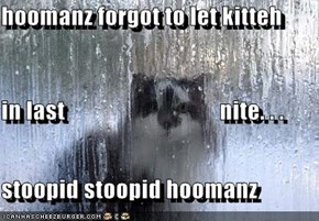 hoomanz forgot to let kitteh  in last                                 nite. . . stoopid stoopid hoomanz