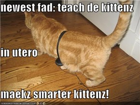 newest fad: teach de kittenz in utero maekz smarter kittenz!