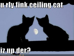 u rly fink ceiling cat  iz up der?