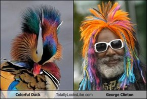 Colorful Duck Totally Looks Like George Clinton
