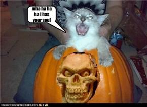 awsome kitty is awsome