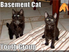 Basement Cat  Youth Group