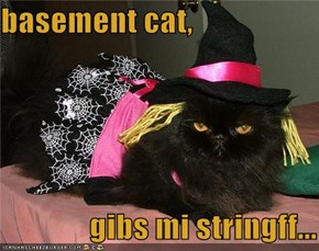 basement cat,                    gibs mi stringff...